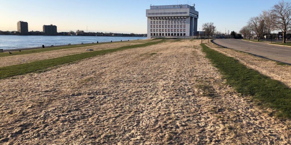 Dead Grass in City of Port Huron