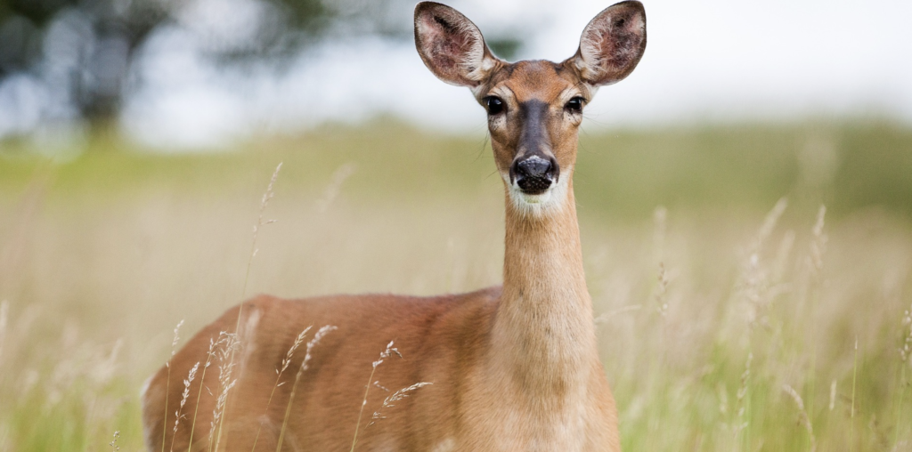 The Centers for Disease Control and Prevention (CDC) has released a report about a Michigan man being infected by tuberculosis (TB) from a deer.