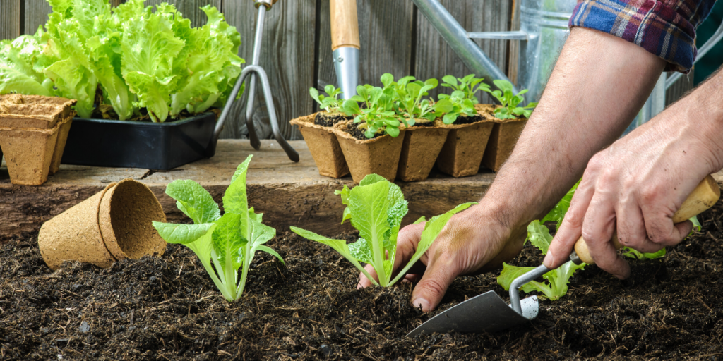 What's in Store for Your Backyard Garden this Spring